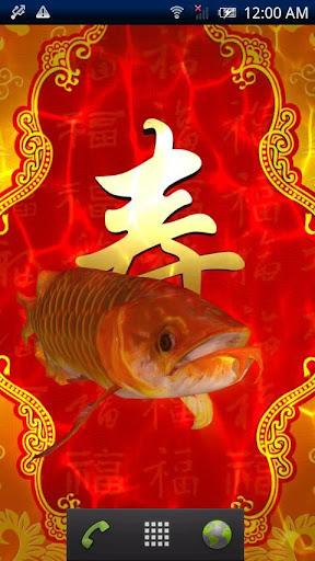 開運龍魚★長寿