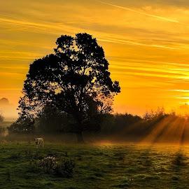 Dawn In The Bog by Leslie Hanthorne - Landscapes Sunsets & Sunrises