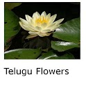 Telugu Flowers icon