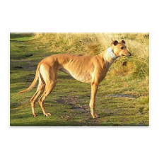 Greyhound Dog Jigsaw Puzzle