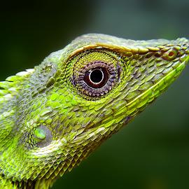 thinking of life by Hendrata Yoga Surya - Instagram & Mobile Android ( reptiles, bunglon, lizard, londok )