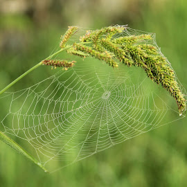 Web on grass by Tio Srie - Nature Up Close Webs