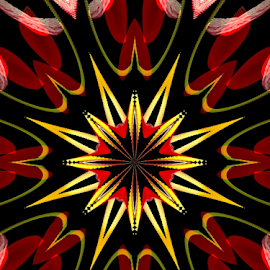Starburst by Tina Dare - Illustration Abstract & Patterns ( abstract, patterns, starburst, designs, star, shapes )