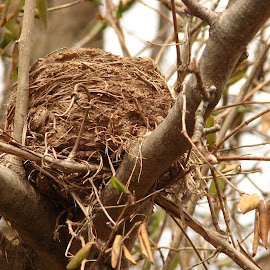 A Lonely Nest by Charles Hooper - Nature Up Close Hives & Nests (  )