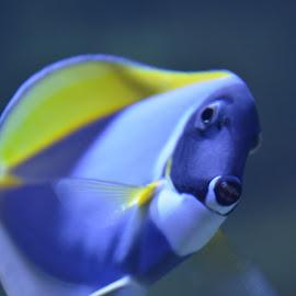 Nemo by Dejan  Paunovic - Animals Fish ( dubai, aquarium, atlantis, nemo )