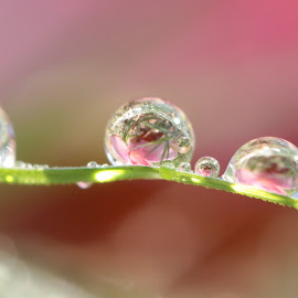 turn around by Lala Fuad - Nature Up Close Natural Waterdrops