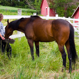 Girl feeding horse on farm. by Gale Perry - Animals Horses (  )