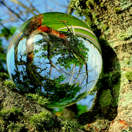 Giant Dew Drop by Elfie Back - Artistic Objects Glass ( tree, dew, glass, sphere,  )