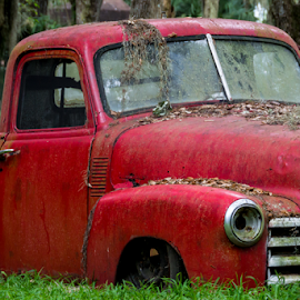 Old Rusty Red with Rifle by Robert Willson - Transportation Automobiles ( pick up truck, red, 1950 chevorlet, cars, bob willson, documentary, robert willson )