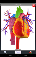 Screenshot of Anatomy Quiz Lite