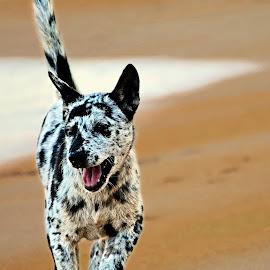 Anjing Pantai by AbngFaisal Ami - Animals - Dogs Running