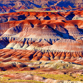 Little Painted Desert by Fred Herring - Landscapes Deserts