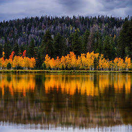 Golden Fringe by Dewey Farmer - Landscapes Waterscapes ( clouds, water, reflection, waterscape, green, yellow, travel, landscape, leaves, aspen, mirror, red, sky, nature, blue, autumn, utah, sunset, fall, trees, gold, sunrise,  )