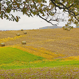 Hay Bails by Sue Matsunaga - Novices Only Landscapes