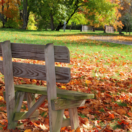 Park Bench by Marsha Biller - Artistic Objects Furniture ( wooden, park, bench, autumn, colored leaves, small, public, furniture, object, fall, color, colorful, nature )