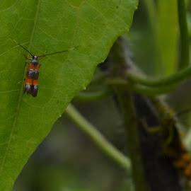 this is my leave by Casterino Rio - Novices Only Macro ( plant, macro, bug, insect, garden )