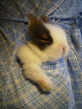 cute rabbit photo1