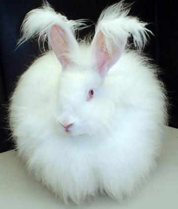 cute rabbit photo 4