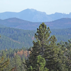 Black Hills of South Dakota by Vicki Strickland - Novices Only Landscapes ( black hills sd, trees, beauty, landscape, depth )