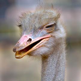 He..He..He by John Meliala - Animals Birds ( bird, potrait, laugh, funny, animal,  )