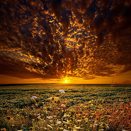 Couldn't Find The Words To Say by Phil Koch - Landscapes Sunsets & Sunrises ( vertical, photograph, farmland, yellow, leaves, storm, love, sky, nature, tree, autumn, shadow, snow, flower, orange, wind, twilight, agriculture, horizon, portrait, dawn, winter, environment, season, national geographic, serene, trees, floral, inspirational, wisconsin, natural light, phil koch, spring, sun, photography, farm, ice, horizons, rain, inspired, office, clouds, park, green, scenic, morning, shadows, wild flowers, field, red, blue, sunset, fall, peace, meadow, summer, sunrise, earth, landscapes,  )