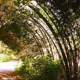 Nature's Archway by Stella Fonder - Nature Up Close Trees & Bushes ( arch, pathway, park, tree, toronto, trees )