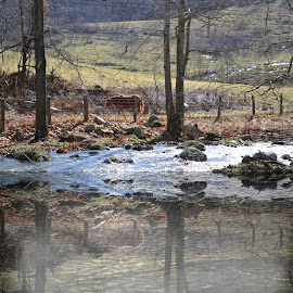 Such a Beautiful Sight ! by Linda Blevins - Animals Horses ( water, reflection, horses, trees,  )