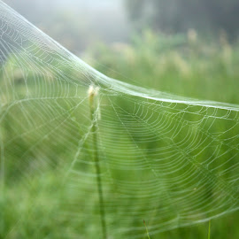by Yap Sin - Nature Up Close Webs
