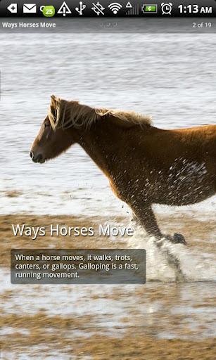 【免費教育App】Horses Photo Book-APP點子