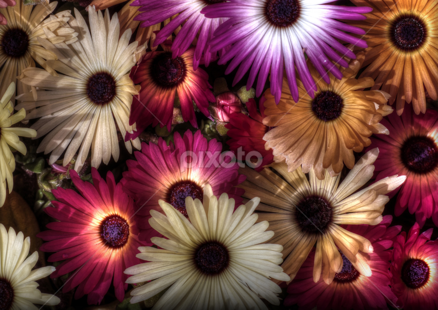 sensor full of flowers by Mark Thompson - Flowers Flowers in the Wild ( orange, flowers, purple, cream, petals, colors )