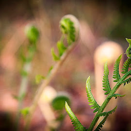 Cochlear by Nancy Senchak - Nature Up Close Other plants