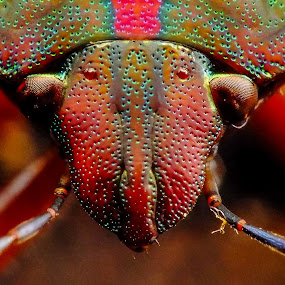 Bug by Rui Santos - Animals Insects & Spiders ( nature, raynox, belém, natureza, bug, pará, abetetuba, brasil )
