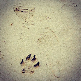 Doggy Pawprints in the Sand. For some reason doggy pawprints are so much more interesting by Mic Larkins - Instagram & Mobile Instagram ( Torquay, dogs, pawprints, ilovedogs )