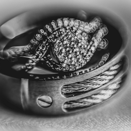 Two Rings Become One by George Brandon - Wedding Details ( black and white, wedding, wedding dress, rings, wedding details, object, artistic, jewelry )