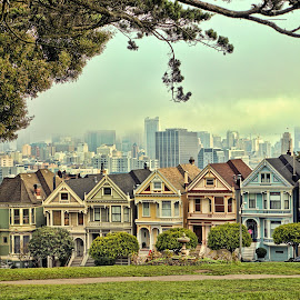 Painted Ladies by Roxie Crouch - Buildings & Architecture Homes ( alamo square, houses, california, buildings, victorian, restored, san francisco, painted ladies )