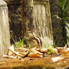 Morning Break.... by Debojyoti Ghosh - Animals Other Mammals