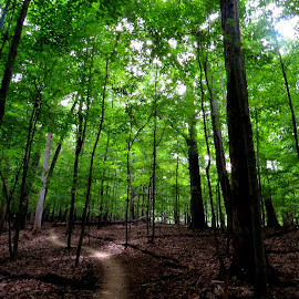 by Mrinal Roy - Landscapes Forests