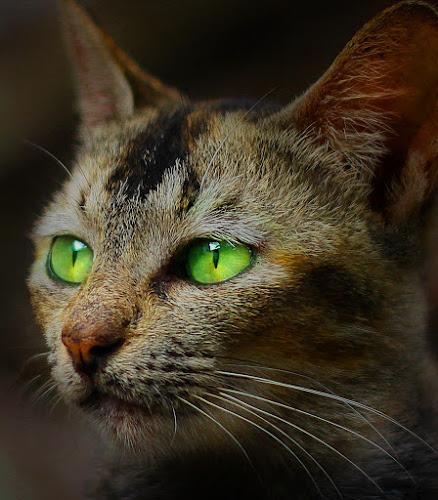 meong by Yudha Portugal - Animals - Cats Portraits