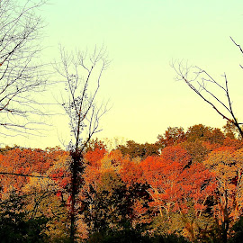 Fall Ridge by Sue Delia - Landscapes Forests ( autumn ridge, fall colors, trees, ridge,  )