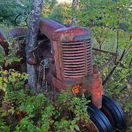 Retired by Mark Mynott - Transportation Other ( old iron, age, meadow, antique tractor, rust, abandoned, old farm equipment )