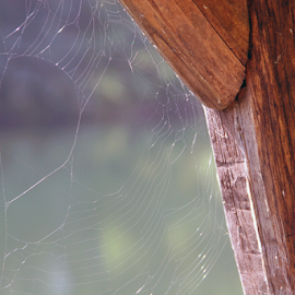 Lacy Pattern by David Nelson - Nature Up Close Webs ( lacy pattern,  )