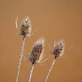 Weeds by Tina Marie - Nature Up Close Leaves & Grasses ( weeds )