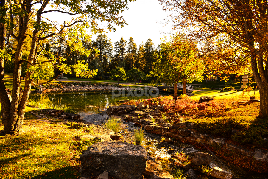 Devonian City Park by Joseph Law - City,  Street & Park  City Parks ( pond, streams., rocks, devonian, sun shine upon, bushes, botanical garden, city park, shadows, trees )
