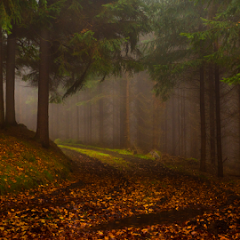 The path in the forest by Peter Samuelsson - Nature Up Close Trees & Bushes