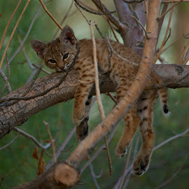 Just hanging around by Mark Stewart - Animals - Cats Kittens