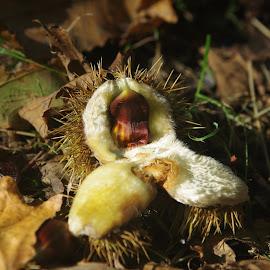 by Michael de Schacht - Nature Up Close Gardens & Produce