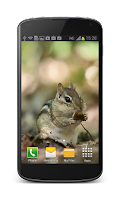 Screenshot of Little Hamster Live Wallpaper