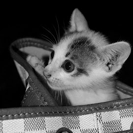 by Rizki Coete' - Animals - Cats Kittens