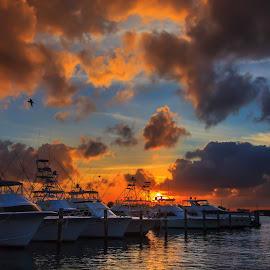 Sailfish Marina by John Hancock - Landscapes Sunsets & Sunrises ( sunset, boats, marina, dock )