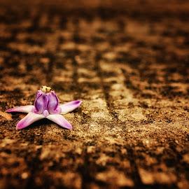 single flower by Nitish Saini - Nature Up Close Other plants ( single, purple, nature, abstarct, artistic, calotropis, flower )